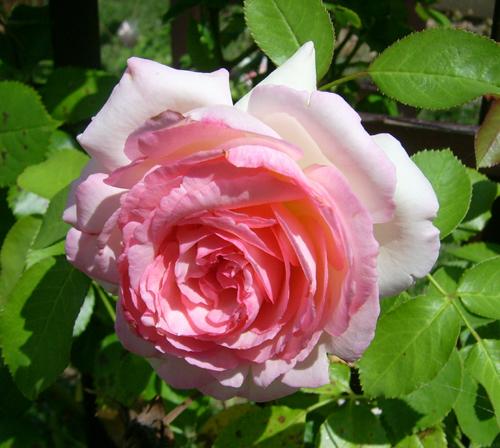 http://sd-5.archive-host.com/membres/images/164353825412355948/bievre_1.jpg
