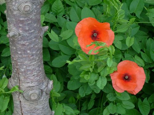 http://sd-5.archive-host.com/membres/images/164353825412355948/couleurs_6.jpg