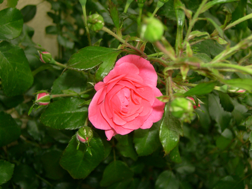 http://sd-5.archive-host.com/membres/images/164353825412355948/couleurs_9.jpg