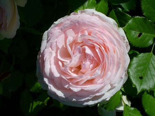 http://sd-5.archive-host.com/membres/images/164353825412355948/fleurs_12.jpg