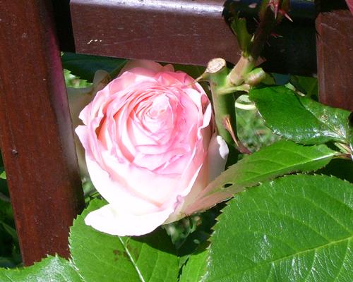http://sd-5.archive-host.com/membres/images/164353825412355948/fleurs_3.jpg