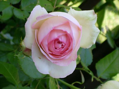 http://sd-5.archive-host.com/membres/images/164353825412355948/fleurs_4.jpg