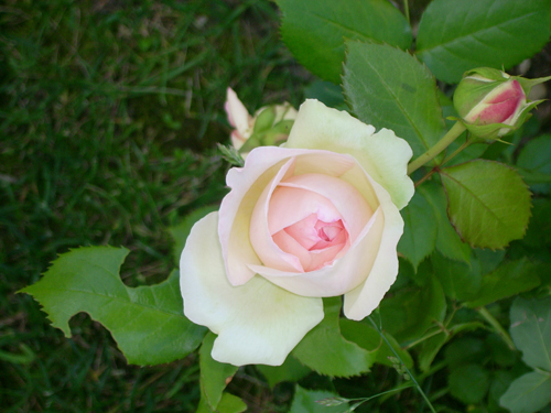 http://sd-5.archive-host.com/membres/images/164353825412355948/fleurs_5.jpg