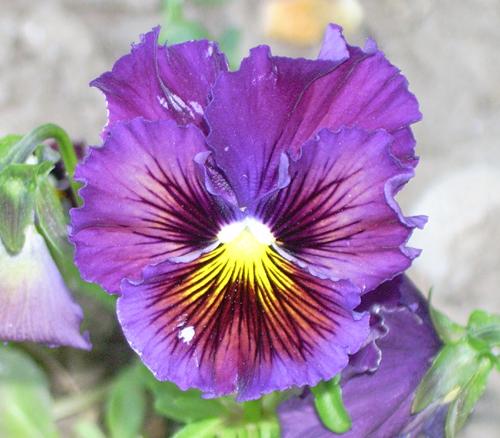 http://sd-5.archive-host.com/membres/images/164353825412355948/fleurs_9.jpg