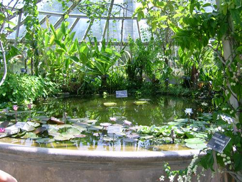 http://sd-5.archive-host.com/membres/images/164353825412355948/jardin_botanique_1.jpg