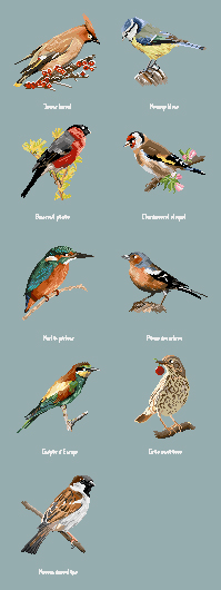 http://sd-5.archive-host.com/membres/images/164353825412355948/oiseaux_2607.jpg
