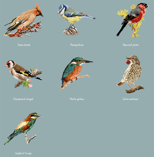 http://sd-5.archive-host.com/membres/images/164353825412355948/oiseaux_2906.jpg
