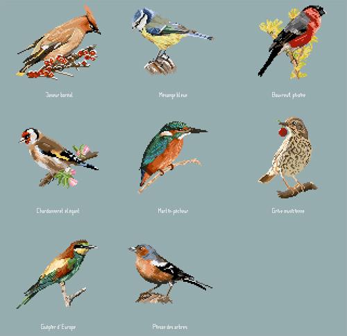http://sd-5.archive-host.com/membres/images/164353825412355948/oiseaux_3006.jpg