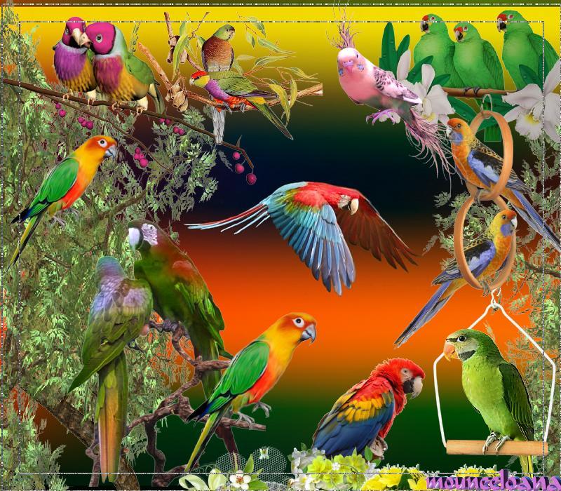 Realisation_du_24-04-13_perroquets.jpg